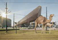 Artprint Wild Wild-Rotterdam, Centraal-Station
